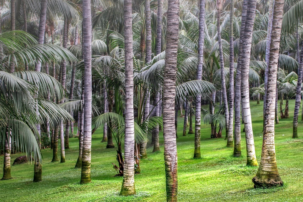 How Palm Oil Contributes To Climate Change